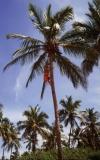075-...-já-mám-chuť-na-kokos