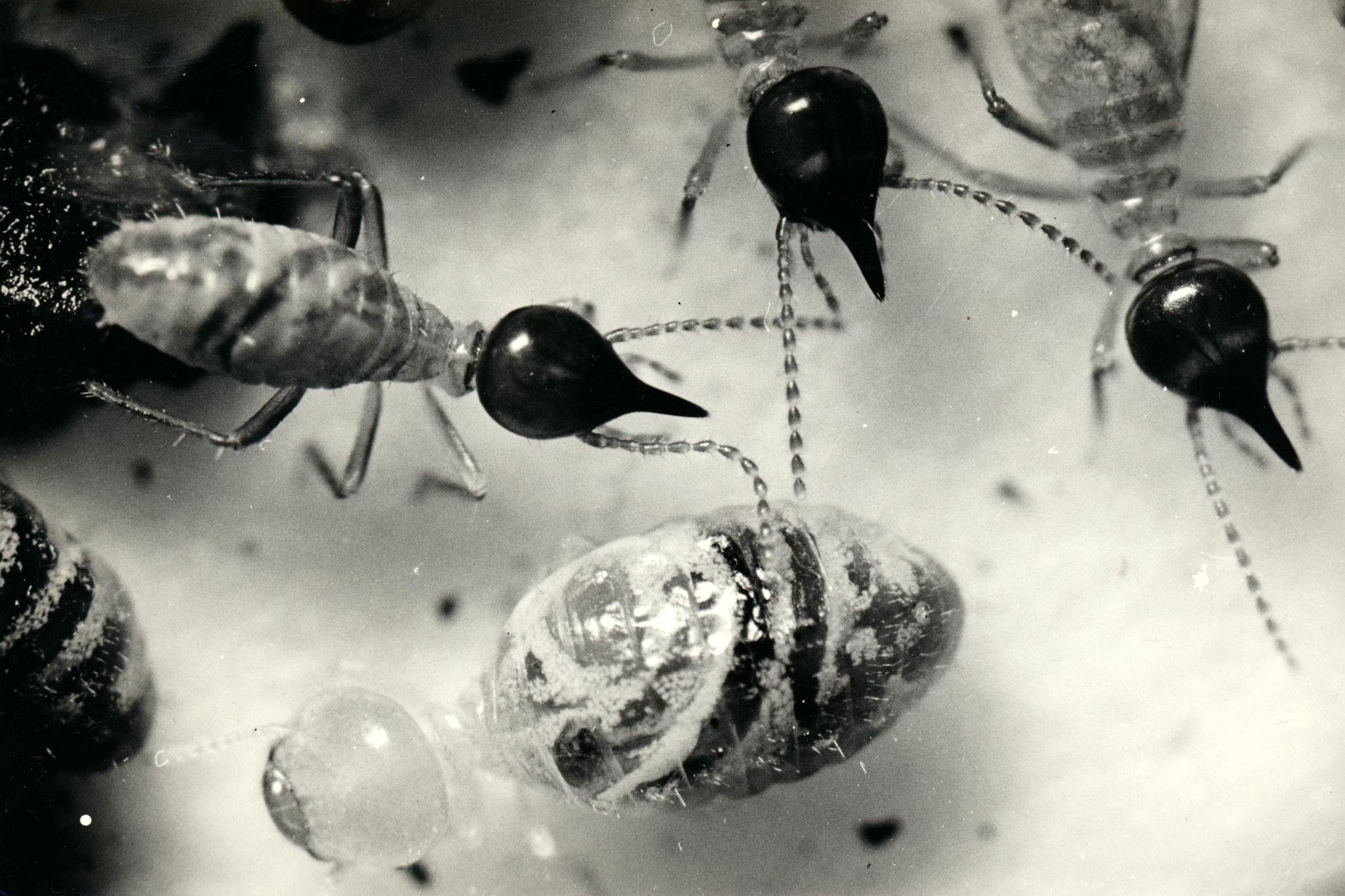 Objevený druh termita