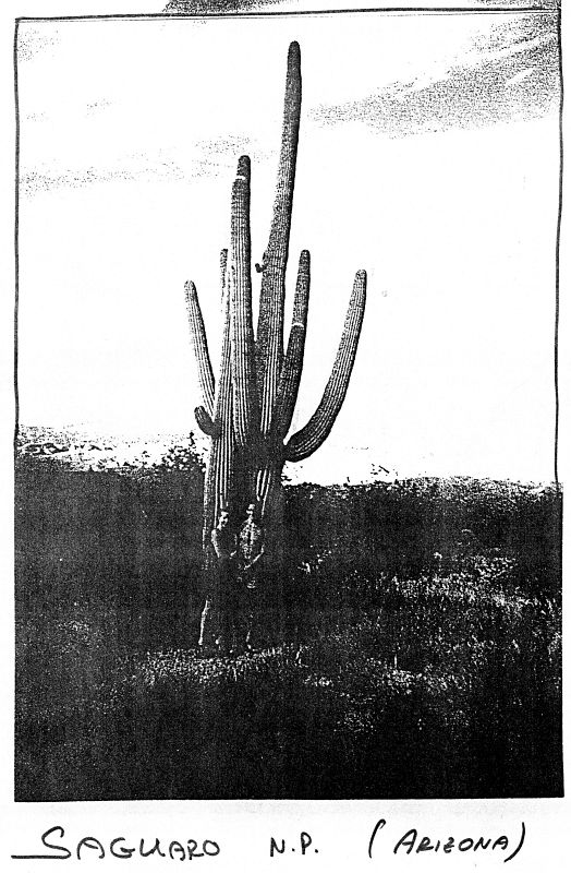 Saguaro N.P. (Arizona)