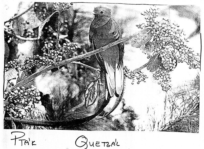 Pták Quetzál
